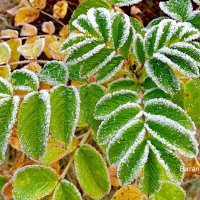 Дыхание мороза :: Виталий Половинко