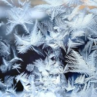 Ледяные пёрышки :: Дарья Кузнецова