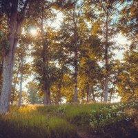summer tale :: Никита Дьяковский