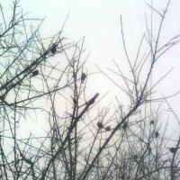 воробьи на дереве :: Юлия Закопайло