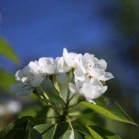 цветы :: Александр .