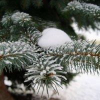 Снег... Снежок... :: Natalisa Sokolets
