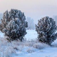 В морозном уборе :: Виктор Ковчин