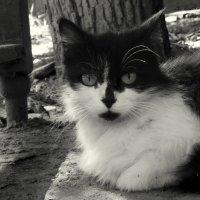 Кошкин дом :: sv.kaschuk