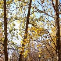 Осенние настроение :: Андрей Кузнецов