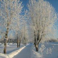 Вот это зима........... :: Вероника Васюченкова