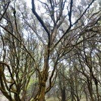 Странный лес :: saratin sergey