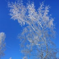 На семи ветрах... :: Наталья Юрова