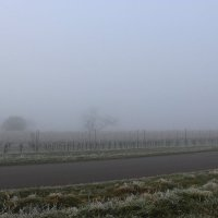 Туман :: Mariya laimite