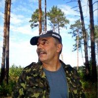Отдых в лесу :: Татьяна Пальчикова