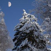 Луна в лесу днем :: Евгений Севостьянов