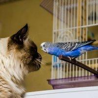 любовь с первого взгляда :: pangrador(юрий) щукин