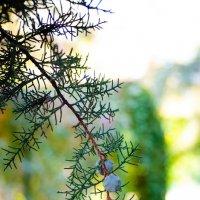 Осень :: Ivan teamen