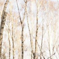 Зимний лес :: Екатерина Климова