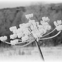 Зимние цветы :: Елена Перевозникова