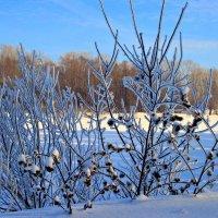 Коль нет цветов среди зимы, Так и грустить о них не надо. -С. Есенин- :: Евгений Юрков