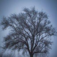 Люблю это дерево :: Роман Хоменко