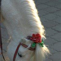 Красавица пони :: Игорь Герман