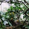 Лимоны :: Ольга Васильева