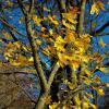 Последние из Золотой осени... :: Sergey Gordoff