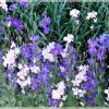 Полевые цветы :: Veselina *