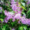 Весна :: Daria Zhdanova