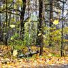Листья падают ... :: Михаил Столяров