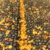 Желтая река :: Сергей Григорьев