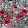 зимняя флора 1 :: Александр Прокудин
