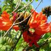 Цветет тюльпановое дерево :: Герович Лилия