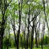 Пришла весна. :: Николай Сидаш