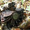 Эхо войны в лесу. :: Валерия Комова