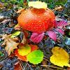 Осенний приветик :: Raduzka (Надежда Веркина)