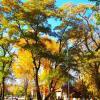 Золотое убранство осеннего парка... :: Любовь К.