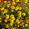 Прощальные цветы :: Святец Вячеслав