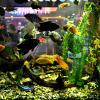 Подводный мир аквариума. :: Михаил Столяров