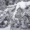 Снег, снежок... :: Владимир Кроливец