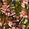 Весна! :: Валерия Комова