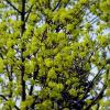 Весна :: Александр Сапунов