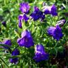 В саду.. :: Антонина Гугаева