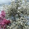 Весна :: Elena Tkacheva