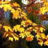 Я любуюсь с восторгом акварельной осенней листвой... :: Лидия Бараблина