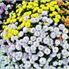 Цветочный ковёр. :: Валерия Комова