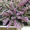 Цветы в  ОБИ :: Наиля