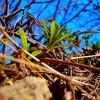 Природа  нам пример показывает! :: Евгений БРИГ и невич