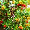 Земляничное дерево :: Ольга (crim41evp)