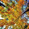 Осень золотая :: Алексей
