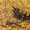 В лесу осеннем :: Юрий Стародубцев