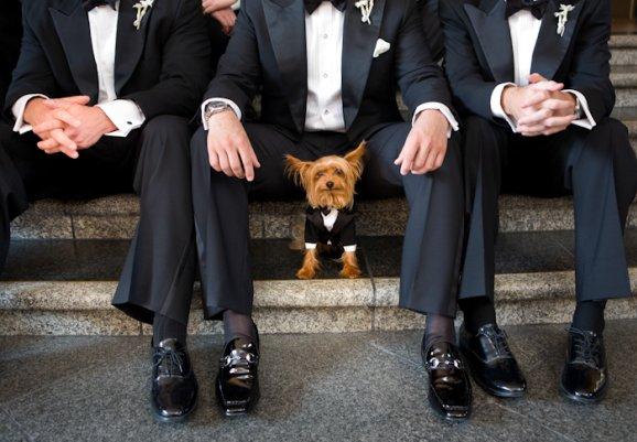 Джо Бьюссинк — самый дорогой свадебный фотограф в мире