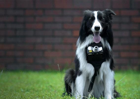 камера nikon, которой снимают даже собаки